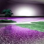 Purple_Night