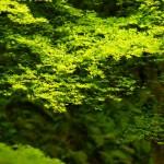 sony ericsson xperia arc green leaves